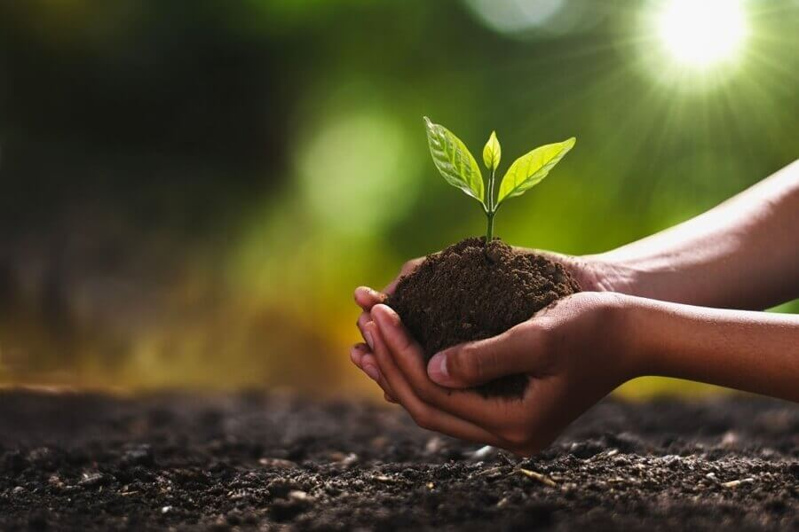 Hand holding small tree for planting.